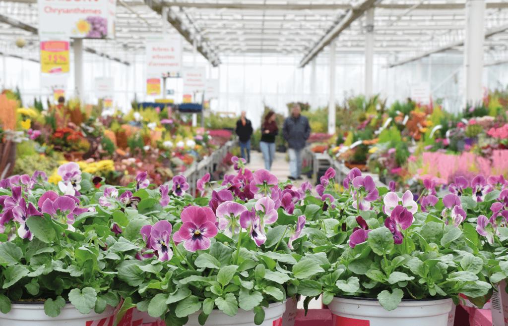 Décor Jardin à Champenoux (54) - Production Horticole Lorraine
